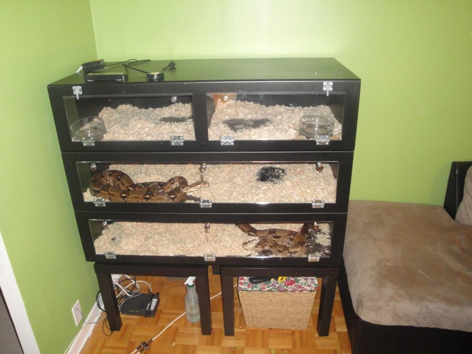 Ball Python Cage Ideas Picture