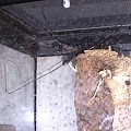 Whip scorpion shed