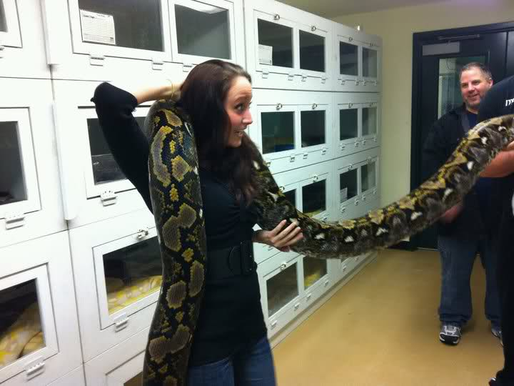 Is It Safe To Allow A Ball Python To Wrap Around Your Neck -1477