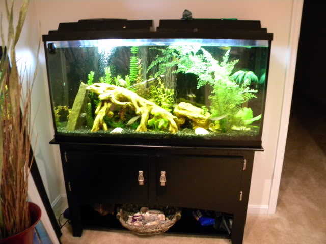 60 gallon fish tank stand accessories in va also fish for. Black Bedroom Furniture Sets. Home Design Ideas