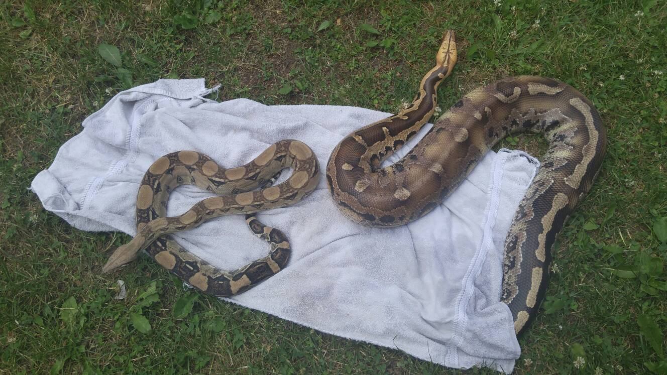 Show Me Pictures Of Snakes