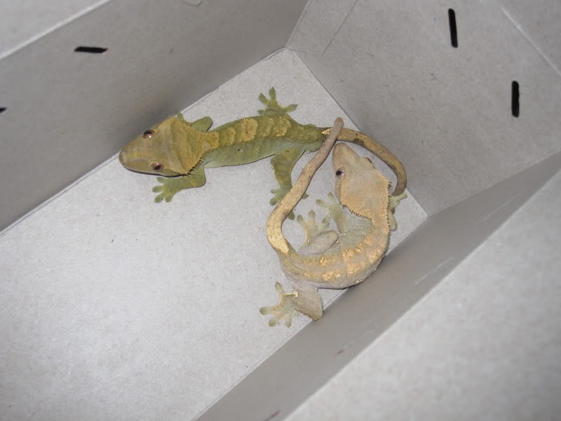 Petco Opening Forest Hills Location With Reptile Rally New York Dnainfo