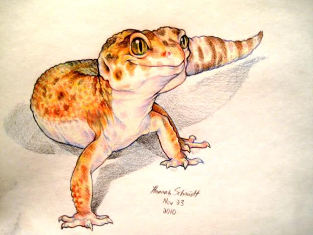 leopard gecko sketch