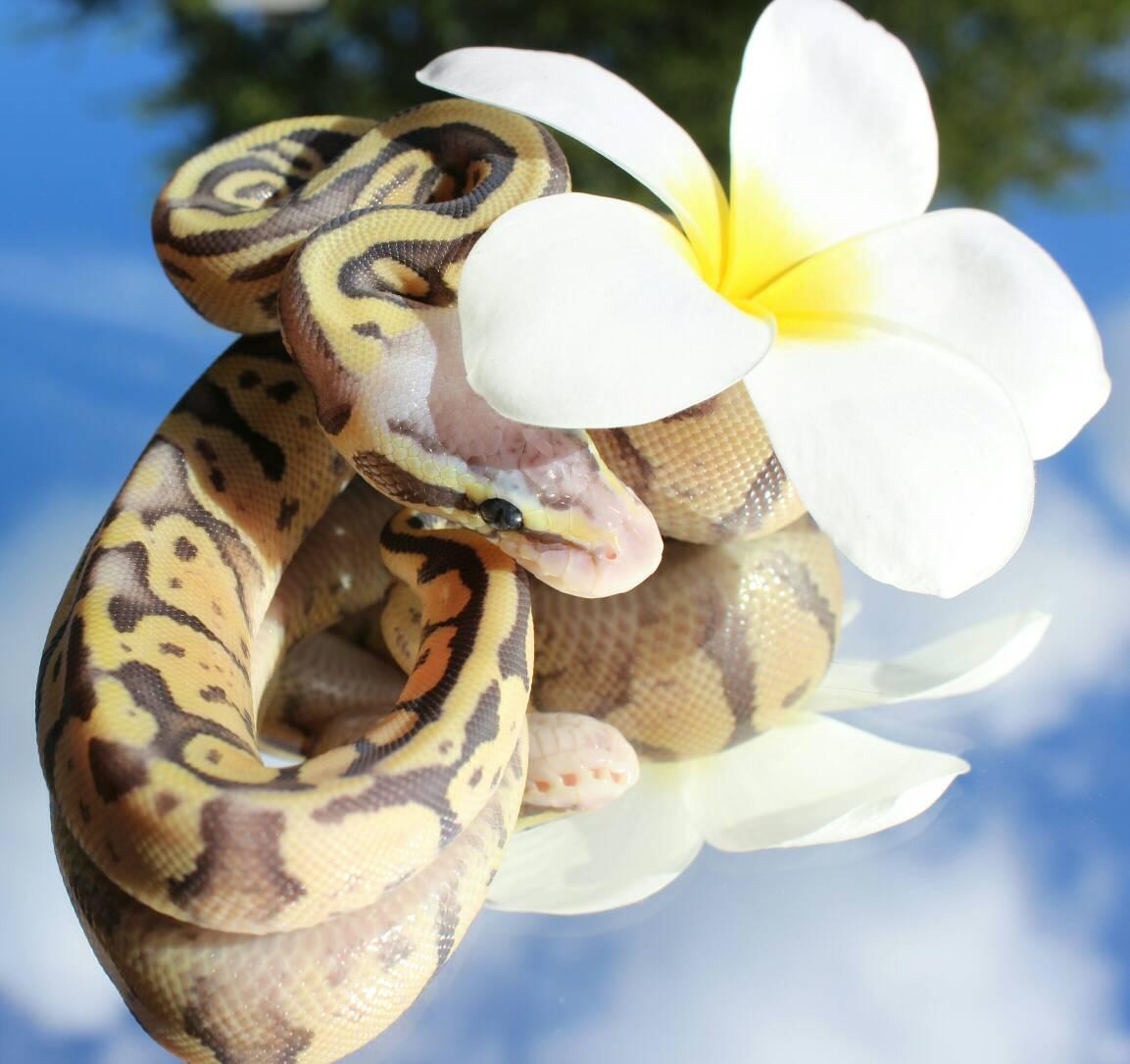 Картинка змея с цветком на голове уместен любую