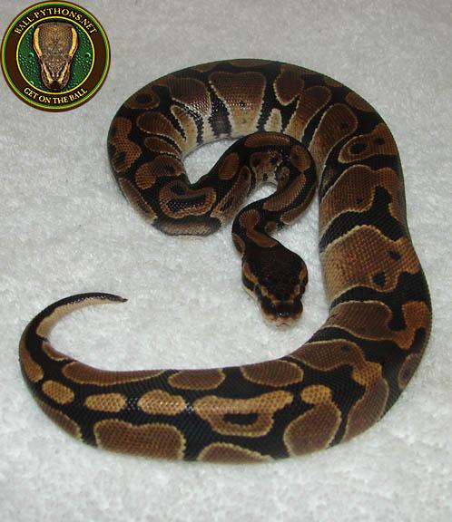 beginning with python