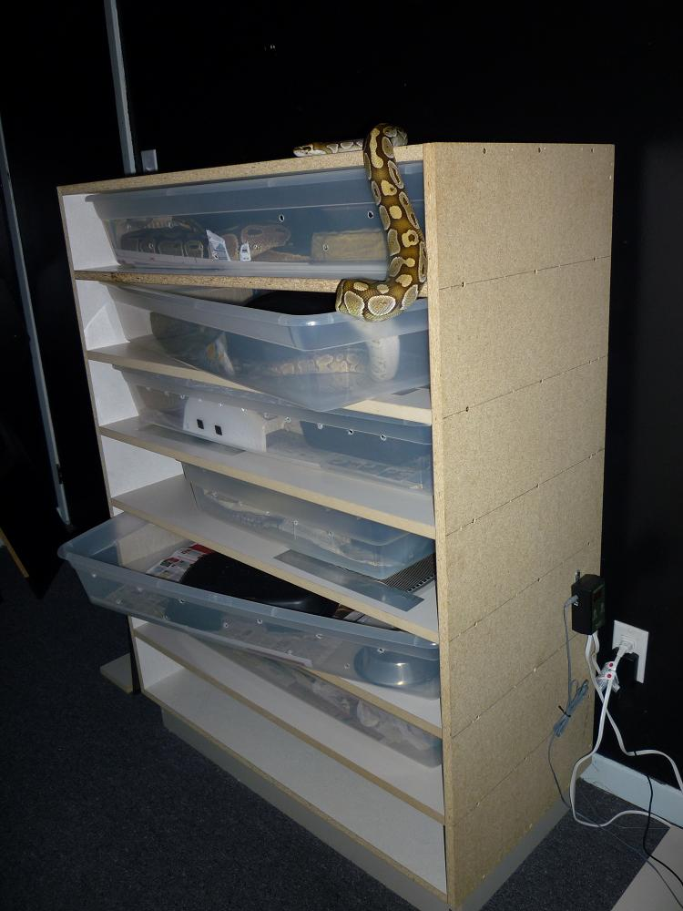 My New Snake Rack