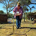z01-10-playing with puff adder