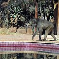 z02-01-baboon pool