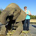 z03-04-elephants