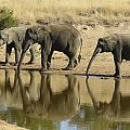 z03-12-elephants