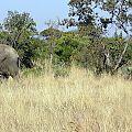 z03-15-elephants