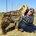 z04-16-hyena