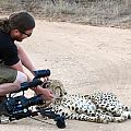 z07-27-cheetah