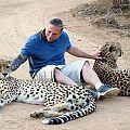 z07-31-cheetah