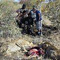 z07-38-cheetah hunt