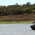 z09-10-croc capture