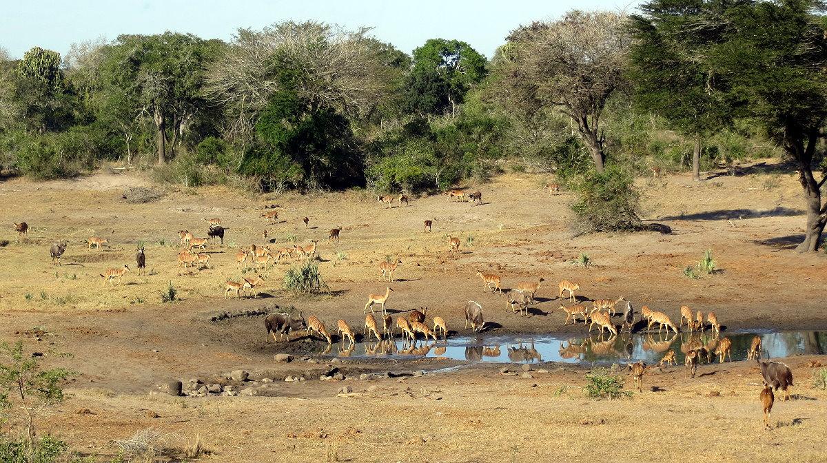z12-11-antelope