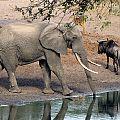 z12-23-elephant