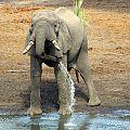 z12-25-elephant