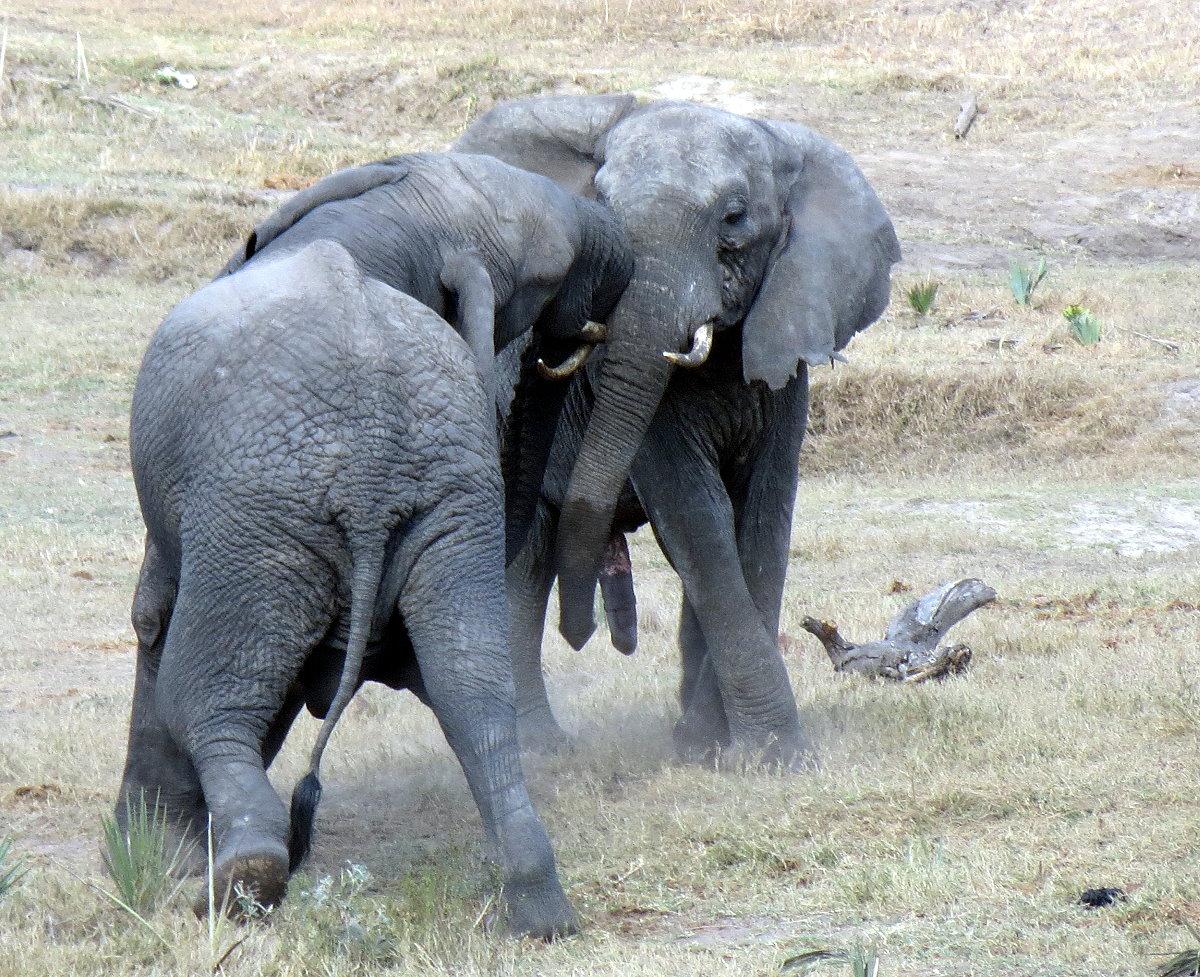 z12-33-elephant