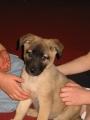 Freya as a puppy