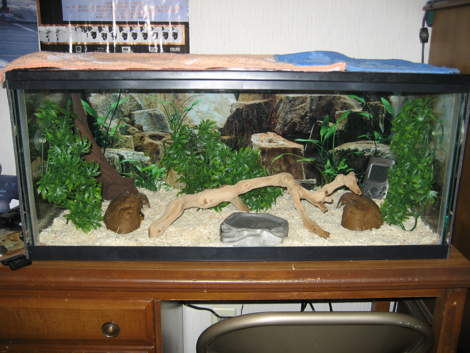 diesels cage setup   ball pythons   gallery