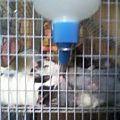 My Rats.