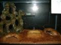 My Reptile Set Ups