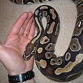 snake rescue 2