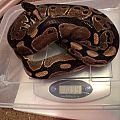 1099 grams