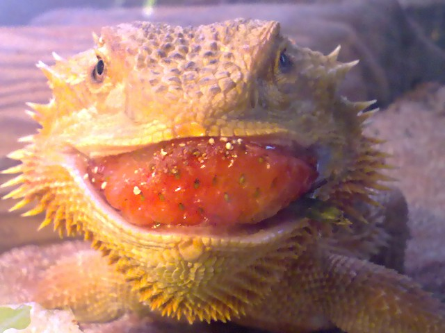 Strawberry Smiles :D