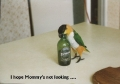 Pi$$ed as a Parrot