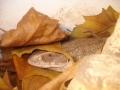 Sav in Leaves