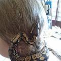 sonia s new hair scrunchie