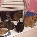 Cat Party!