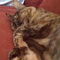 Mitzi sleeping
