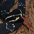 Tasting Venom