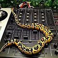 Norman DJing