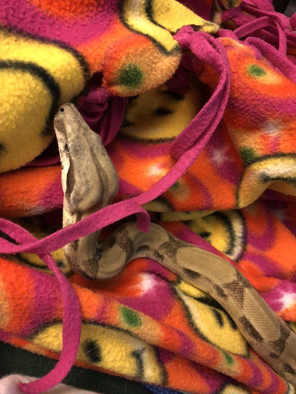 behira on blanket 358628