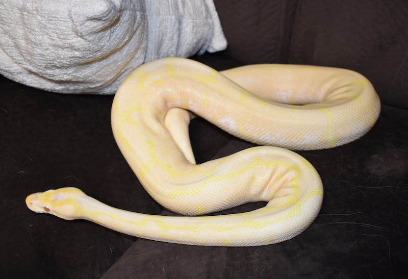 shayna after shed