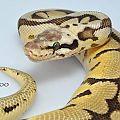 My Snakessss - 2014 05 15