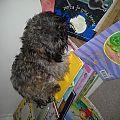 Teddy Man, snoozin' on some books.