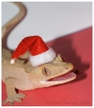Wilson The Christmas Gecko