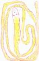 Ryan's drawing of an albino bp