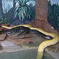 Mr Snake. 15' 117 lbs.