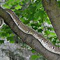 Lucy tree climbing