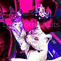 Lord Sorrils Cats