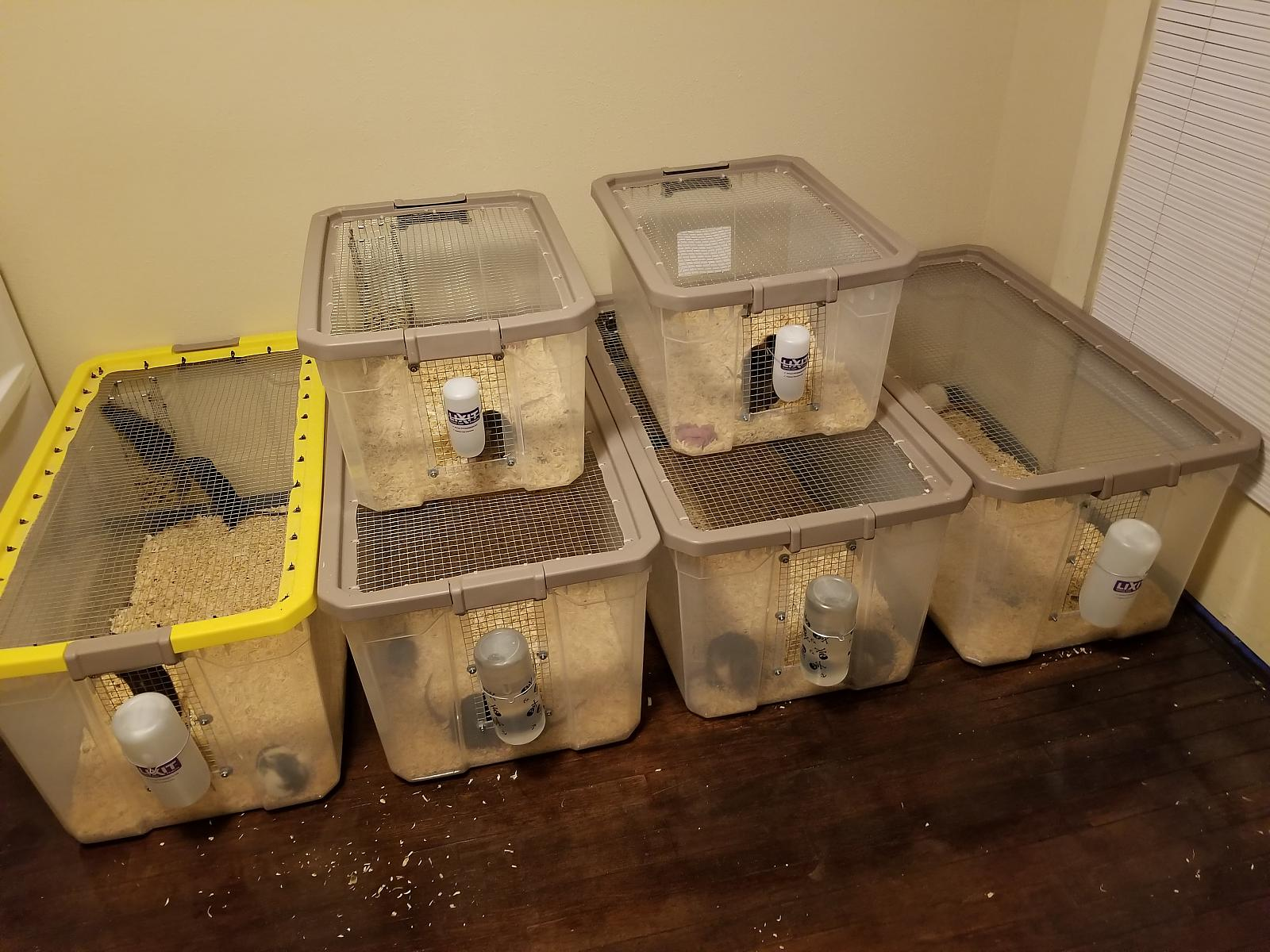 Rat Tubs for Feeders/Pets