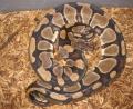 Huge Female