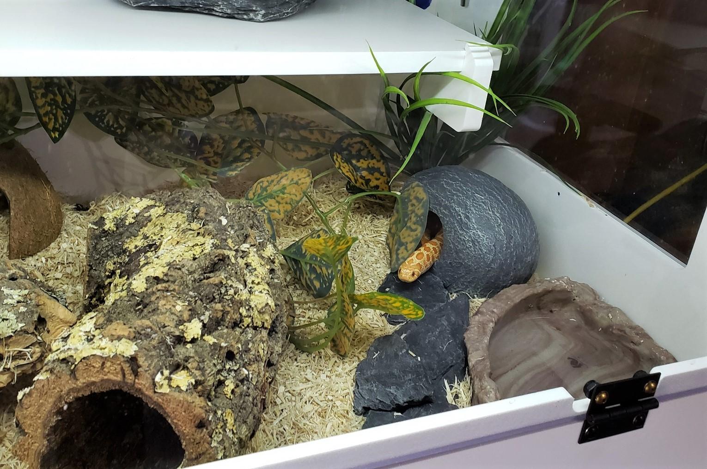 peanut new enclosure jan 21